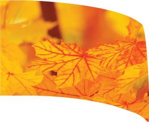 Custom Standard Digital Guard Flag SW122 - Fall season leaves